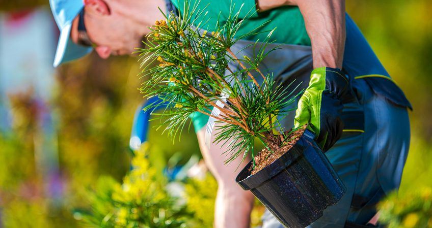 Técnico En Jardinería Y Floristería Avanzaentucarrera Com
