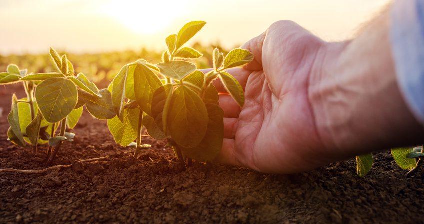 Técnico en Producción Agroecológica