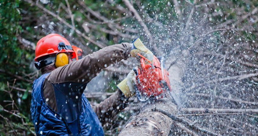 Técnico en Trabajos Forestales y de Conservación del Medio Natural