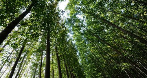 Técnico en gestión forestal