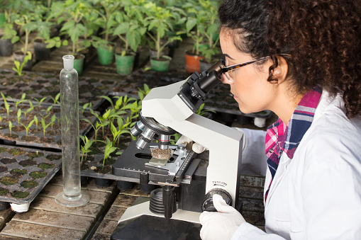 Grados en ecología y medio ambiente: ¿dónde puedo estudiarlos?