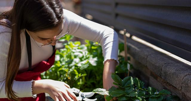 Curso en agricultura ecológica: descubre todo lo que puede aportarte