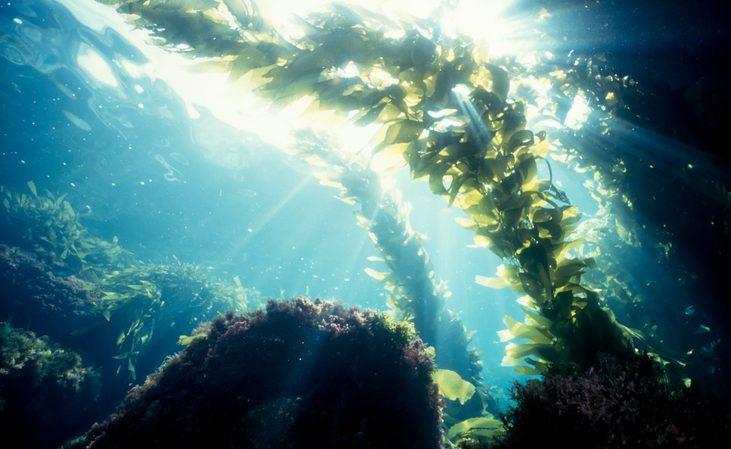 Descubre las ventajas de hacer un curso de botánica marina