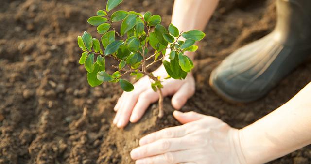 Cómo convertirte en un profesional de la repoblación forestal