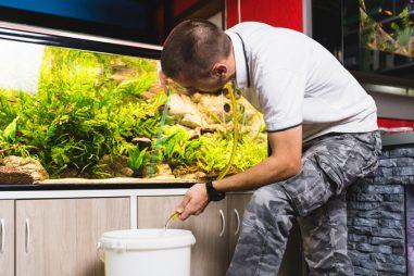 Qué es la acuariofilia marina y cómo convertirla en tu profesión